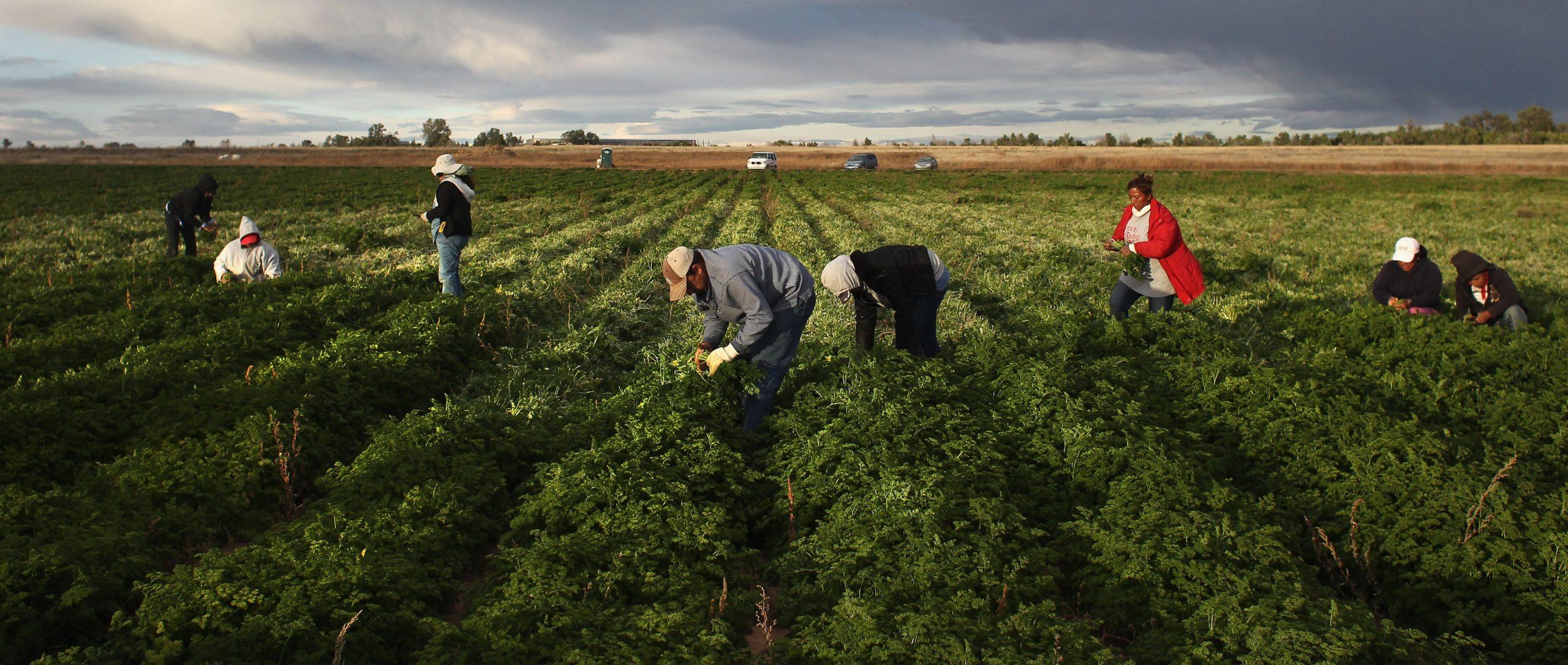 Delfino Madden   agriculture